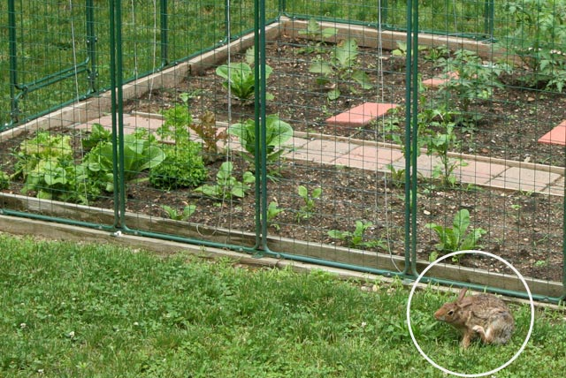 Garden fencing protection from deer rabbit proof critter for How to protect your garden from animals